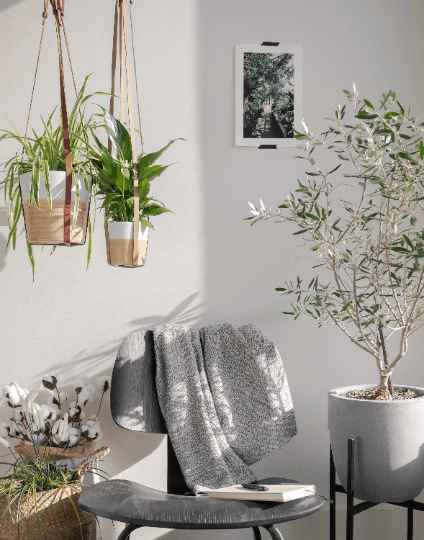 leather plant hanger